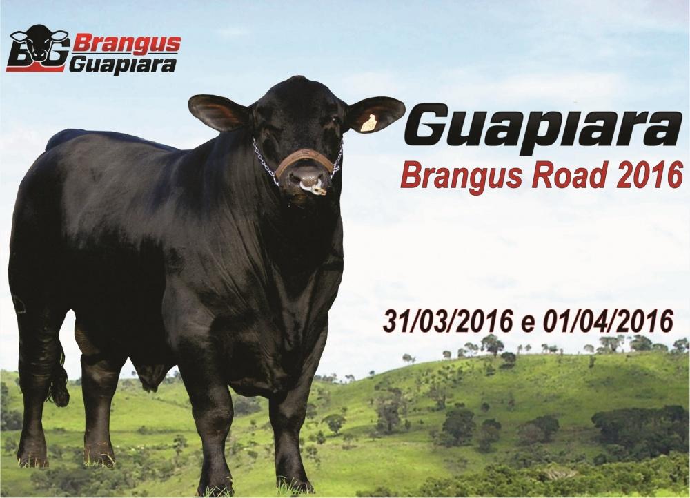 Guapiara Brangus Road 2016